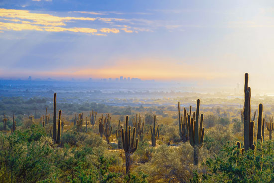 Sonoran Desert near Mesa Arizona
